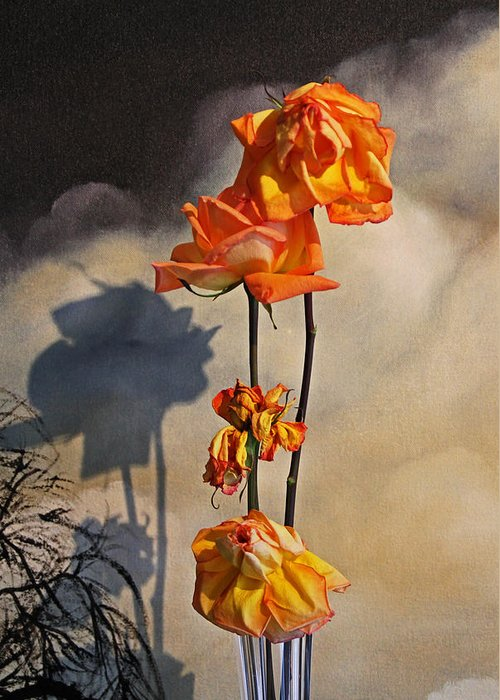 Roses Greeting Card featuring the photograph Sad To See You Go by John Stuart Webbstock