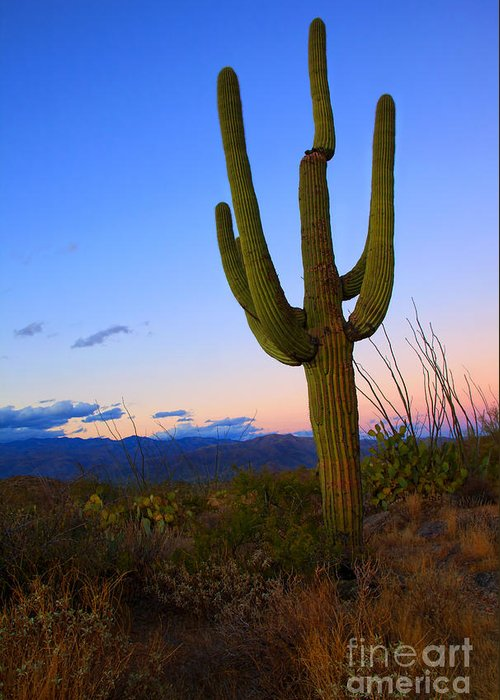 Saguaro Greeting Card featuring the photograph Saguaro Dusk by Mike Dawson