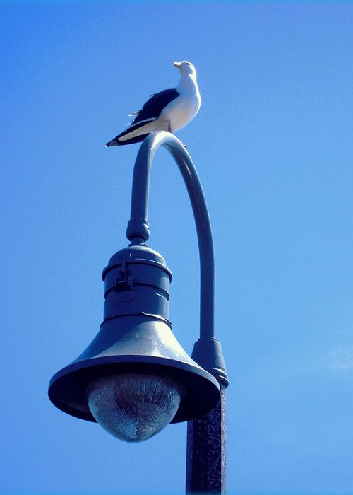 Gulls Greeting Card featuring the photograph San Clemente Sea Gull by Don Struke