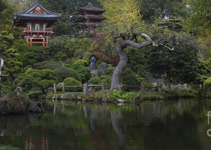 San Francisco Greeting Card featuring the photograph San Francisco Japanese Garden by Mike Reid