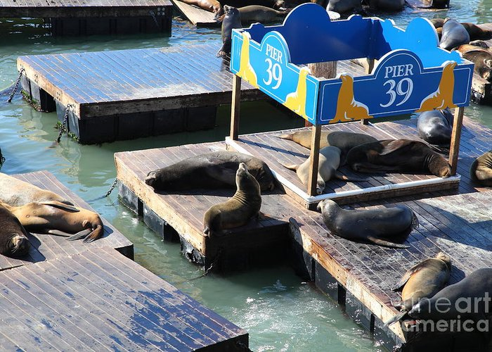 San Francisco Greeting Card featuring the photograph San Francisco Pier 39 Sea Lions 5d26105 by Wingsdomain Art and Photography