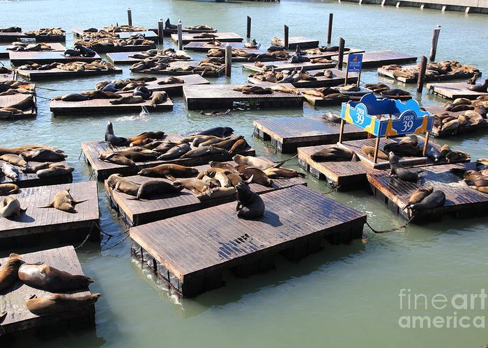 San Francisco Greeting Card featuring the photograph San Francisco Pier 39 Sea Lions 5d26115 by Wingsdomain Art and Photography
