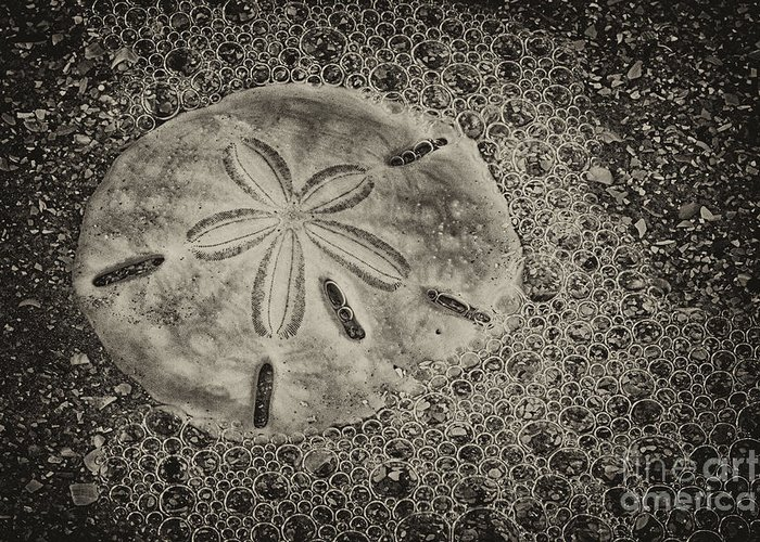 Sand Dollar Greeting Card featuring the photograph Sand Dollar 3 Black And White Botany Bay by Carrie Cranwill
