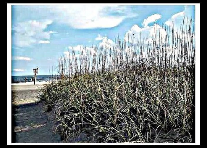 Beach Greeting Card featuring the photograph Sand Dunes And Sea Grass by Kristy Cotone