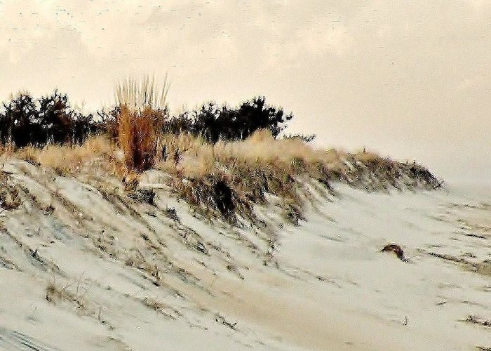 Sand Dunes Greeting Card featuring the photograph Sand Dunes At Penny Beach by Kim Bemis