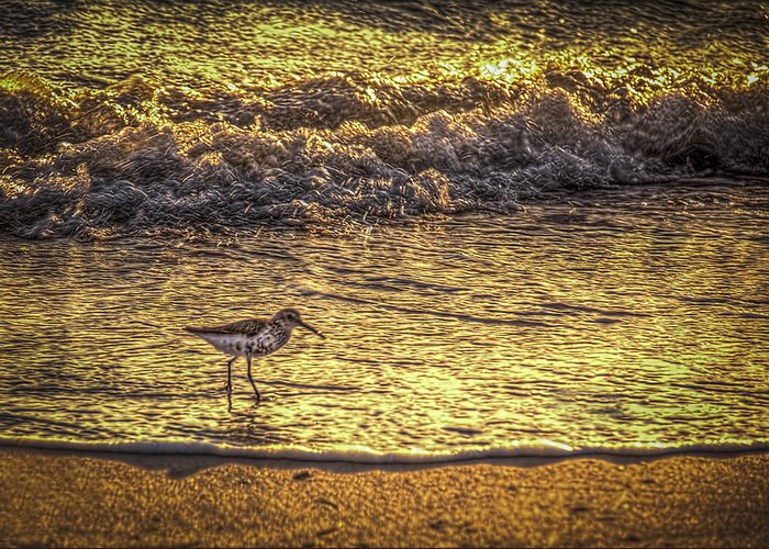 Sand Piper Greeting Card featuring the photograph Sand Piper by Marvin Spates