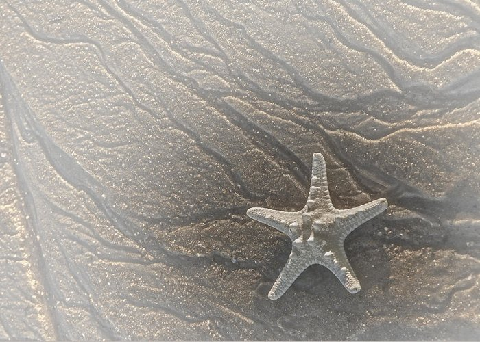 Sea Greeting Card featuring the photograph Sand Prints And Starfish II by Susan Candelario