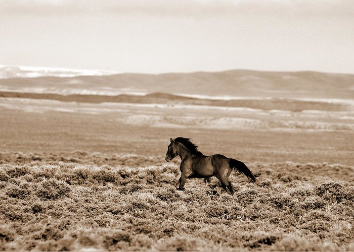 A Blm Mustang Runs In The Sand Wash Basin Near Baggs Greeting Card featuring the photograph Sand Wash Mustang by Lourie Zipf
