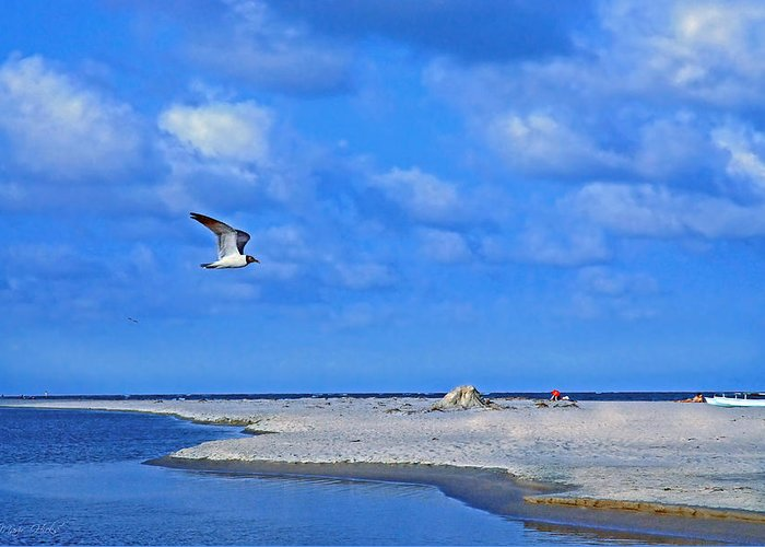 Seagull Greeting Card featuring the photograph Sandbar Bliss by Marie Hicks