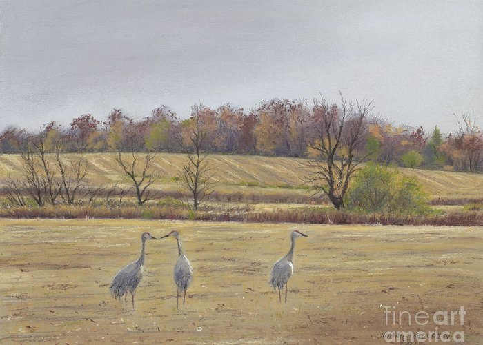 Sandhill Cranes Greeting Card featuring the painting Sandhill Cranes Feeding In Field by Jymme Golden