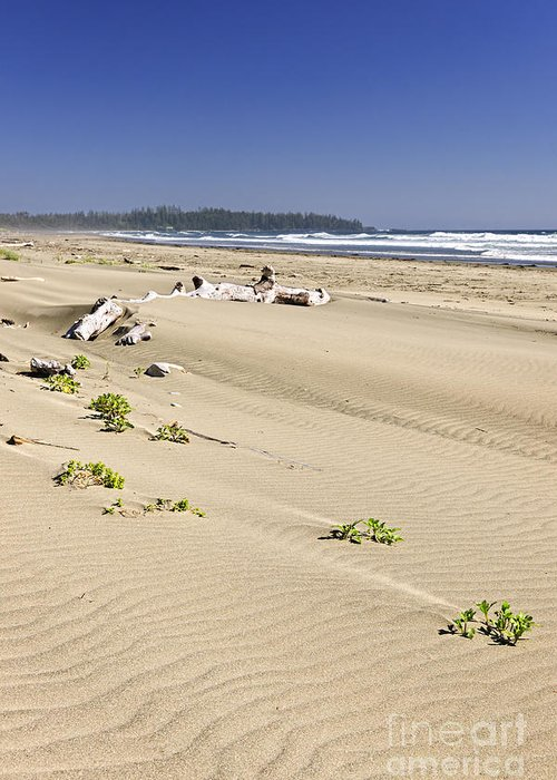 Pacific Greeting Card featuring the photograph Sandy Beach On Pacific Ocean In Canada by Elena Elisseeva