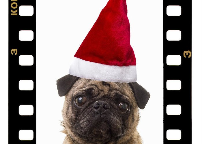 Pug Greeting Card featuring the photograph Santa Pug - Canine Christmas by Edward Fielding