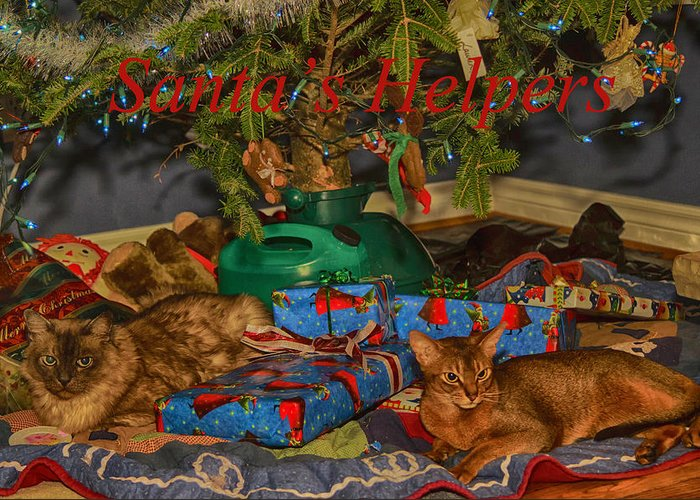 Abyssinian Greeting Card featuring the photograph Santa's Helpers by Gary Hall
