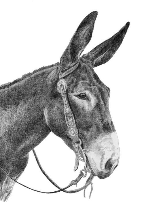 Donkey Greeting Card featuring the drawing Sara by Shelly Asche