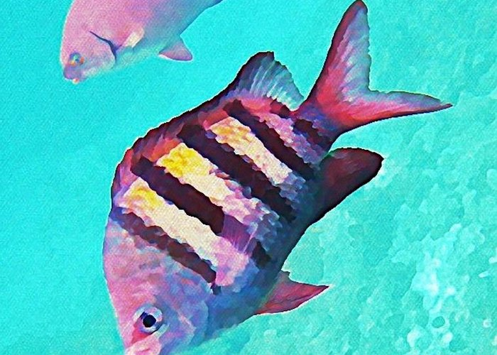 Fish On A Reef Greeting Cards