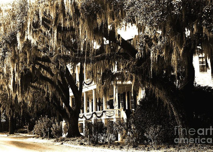 Old Savannah With Moss Greeting Cards