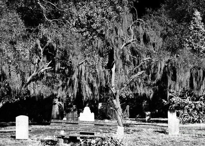 Savannah Resting Place Greeting Card featuring the photograph Savannah Resting Place by John Rizzuto