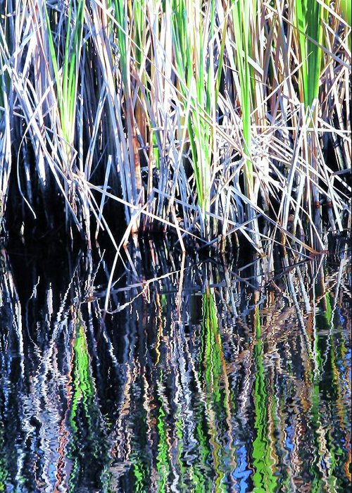 Landscape Greeting Card featuring the photograph Sawgrass Reflections by Kicking Bear Productions