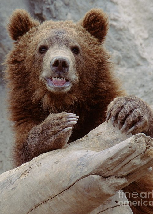 Grizzlybear Greeting Card featuring the photograph Say Cheeze by Bart Webb