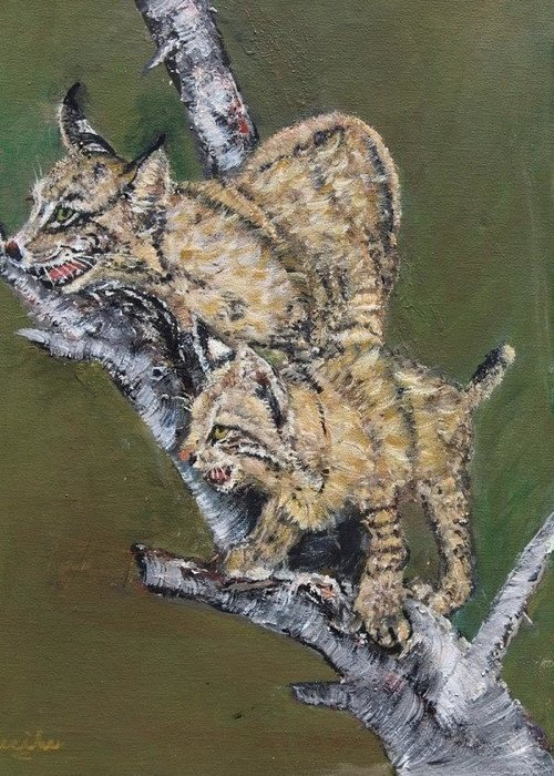 Bobcats Greeting Card featuring the painting Scaredy Bobcats by Cecile Fortier