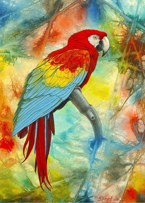 Macaw Greeting Cards