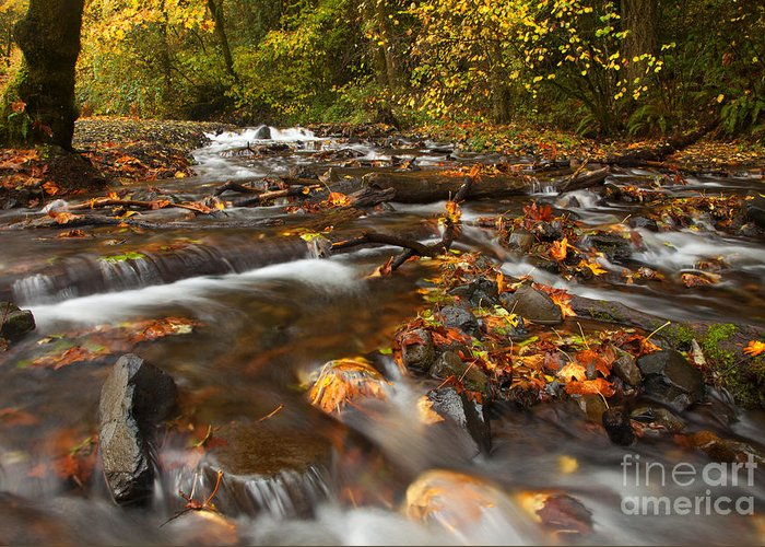 Wahkeena Creek Greeting Card featuring the photograph Scattered Leaves by Mike Dawson