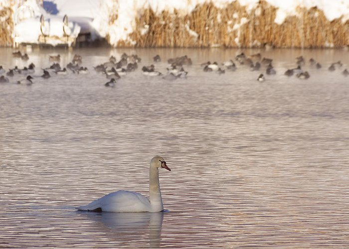 Snow Greeting Card featuring the photograph Scene At The Lake by Gloria Pasko