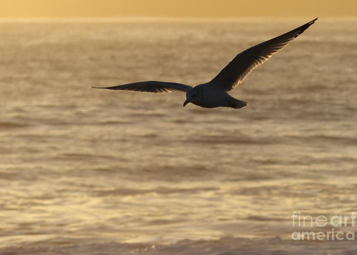 Sea Greeting Card featuring the photograph Sea Bird In Flight by Paul Topp