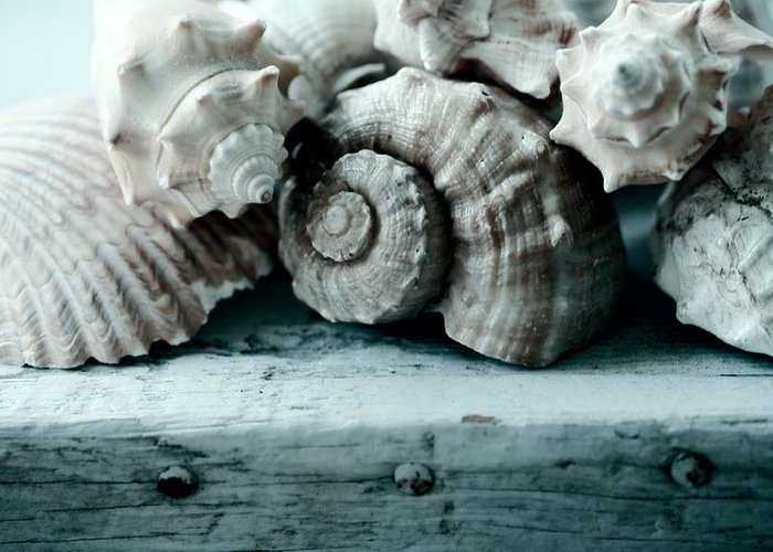 Sea Shells Greeting Card featuring the photograph Sea Gifts by Bonnie Bruno