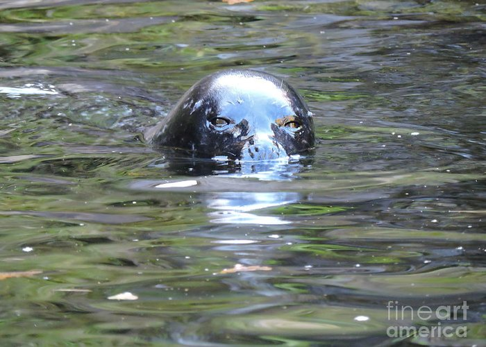 Sea Lion Greeting Card featuring the photograph Sea Lion 2 by Brandi Moore
