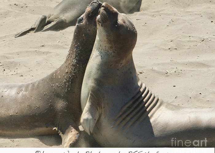 Sea Lions Greeting Card featuring the photograph Sea Lion Love From The Book My Ocean Contact Laura Wrede To Purchase This Print by Artist and Photographer Laura Wrede
