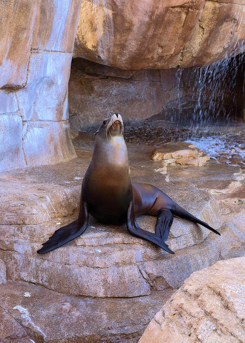 Sea Lion Greeting Card featuring the photograph Sea Lion by Viktor Savchenko