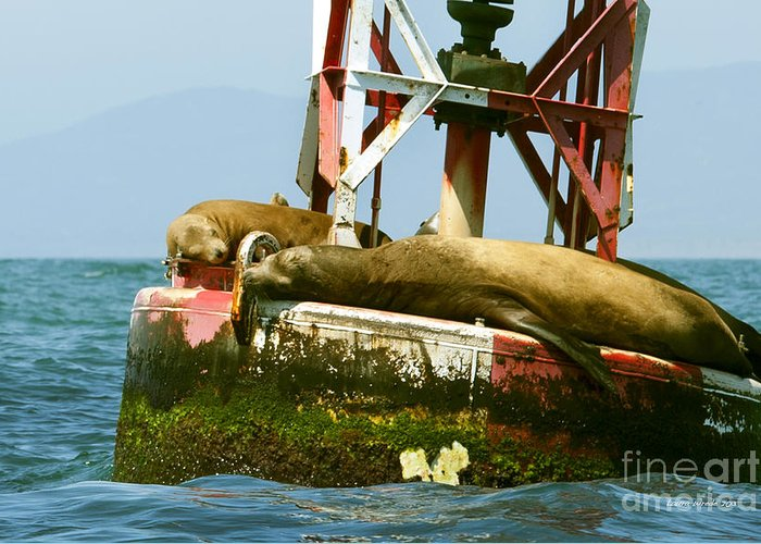 Sea Lions Greeting Card featuring the photograph Sea Lions Floating On A Buoy In The Pacific Ocean In Dana Point Harbor by Artist and Photographer Laura Wrede