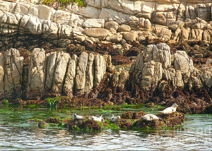 Seals In Monterey Bay Greeting Cards