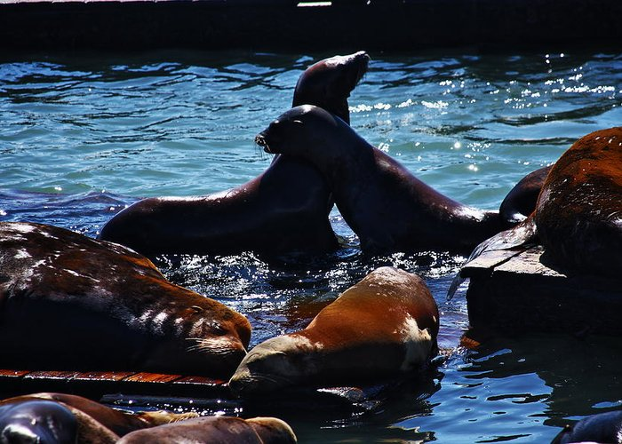 San Francisco Greeting Card featuring the photograph Sea Lions In San Francisco Bay by Aidan Moran
