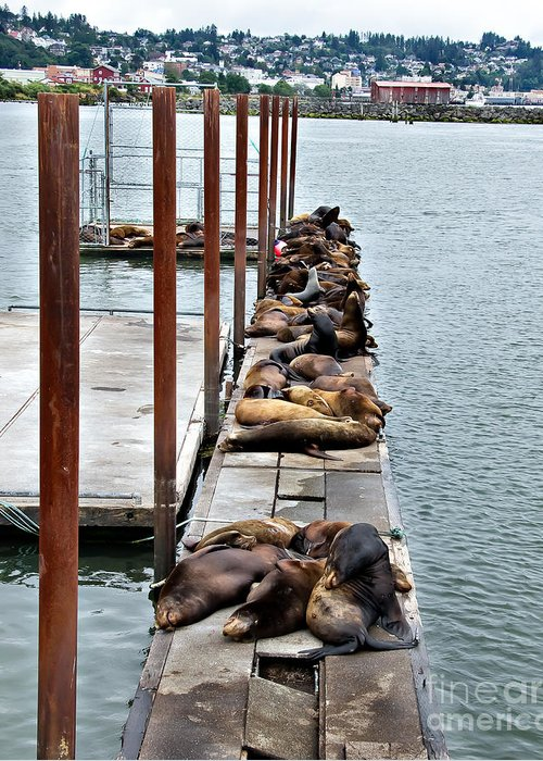 West Coast Greeting Card featuring the photograph Sea Lions Sleeping by Robert Bales