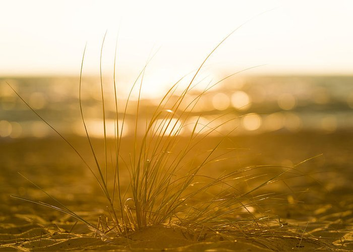 Michigan Greeting Card featuring the photograph Sea Oats Sunset by Sebastian Musial