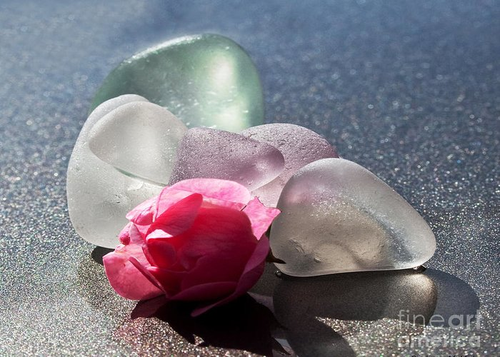 Sea Glass Greeting Card featuring the photograph Sea Rose by Barbara McMahon