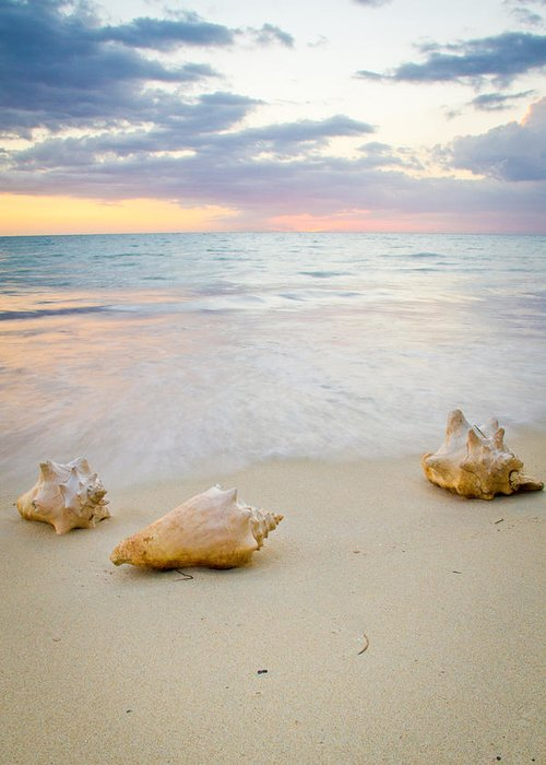 Jamaica Greeting Card featuring the photograph Sea Shells At Sunset by Nersibelis Photography