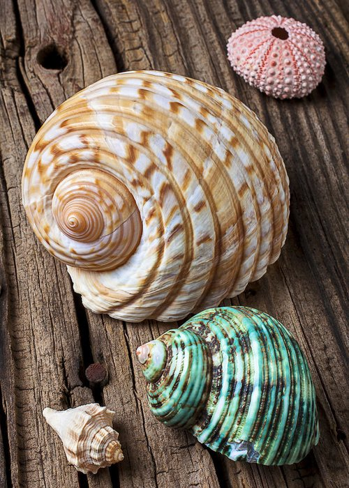 Sea Shell Greeting Card featuring the photograph Sea Shells With Urchin by Garry Gay