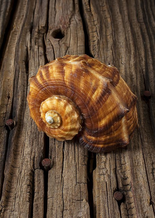 Sea Shell Greeting Card featuring the photograph Sea Snail Shell On Old Wood by Garry Gay