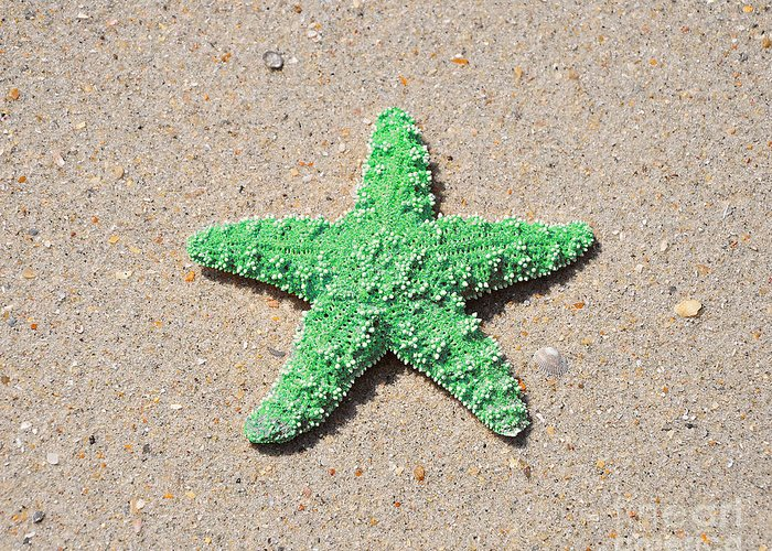 Sea Star Greeting Card featuring the photograph Sea Star - Green by Al Powell Photography USA