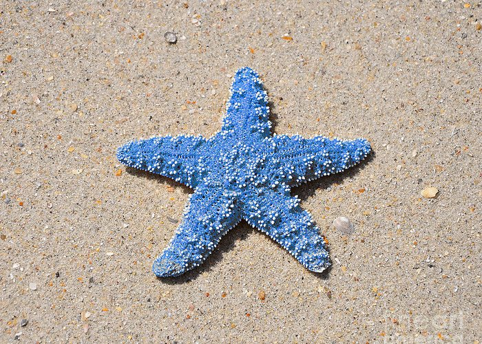Sea Star Greeting Card featuring the photograph Sea Star - Light Blue by Al Powell Photography USA