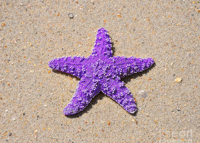 Sea Star Greeting Card featuring the photograph Sea Star - Purple by Al Powell Photography USA