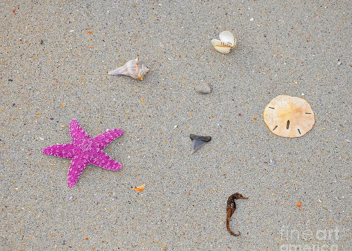 Sea Star Greeting Card featuring the photograph Sea Swag - Pink by Al Powell Photography USA