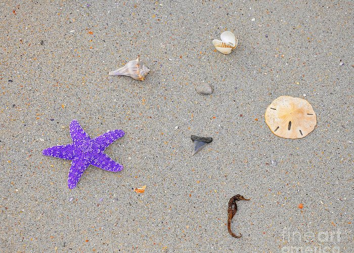 Sea Star Greeting Card featuring the photograph Sea Swag - Purple by Al Powell Photography USA