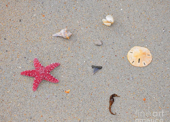 Sea Star Greeting Card featuring the photograph Sea Swag - Red by Al Powell Photography USA