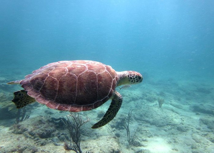 Sea Turtle Greeting Card featuring the photograph Sea Turtle 5 by Daniel Smith