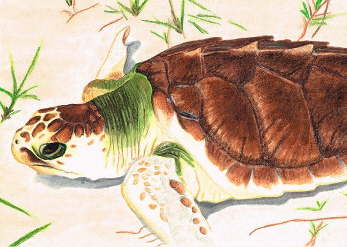 Painted Turtle Greeting Cards