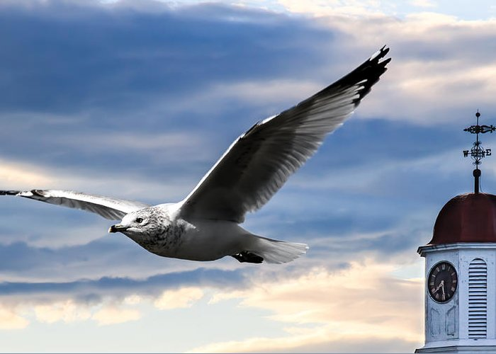 Seagull Greeting Card featuring the photograph Seagull And Clock Tower by Bob Orsillo